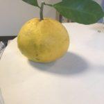 フレッシュ柑橘